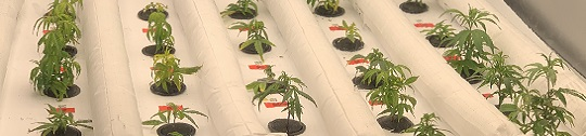 Plants grow in Hortica's connected cultivation environment