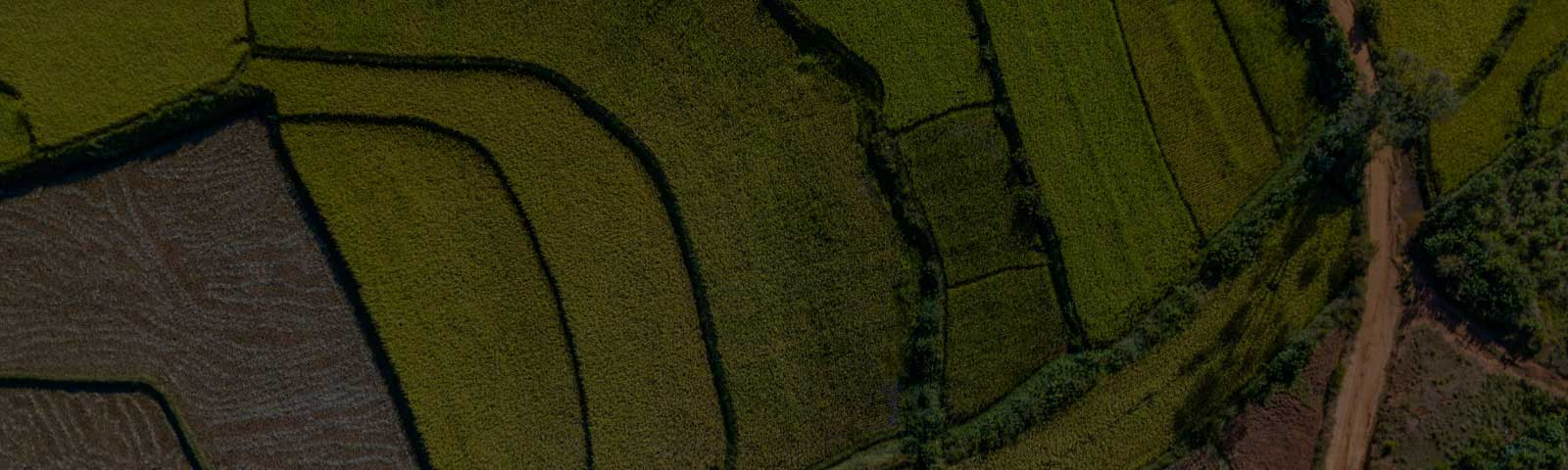 Aerial view of fields in geometric pattern