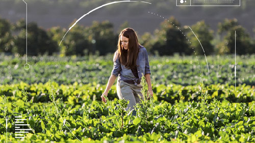 Woman farming in a field of crops